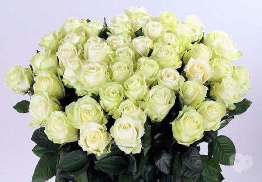 Букет троянд Франківськ