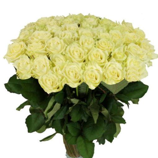 Білі троянди у Луцьку