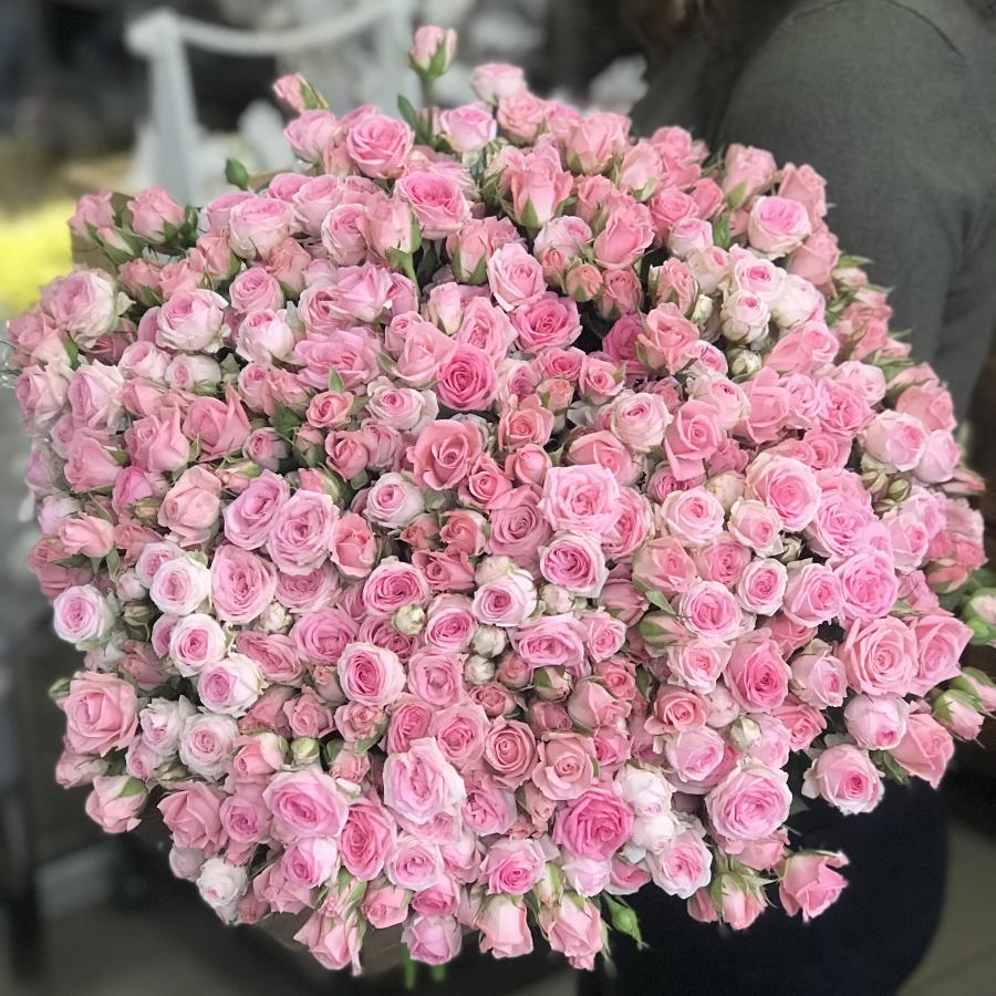 Кущові троянди у Львові