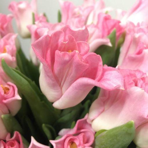 тюльпани купити