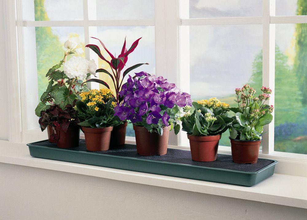 Домашній фен-шуй :як за допомогою квітів створити гармонію вдома